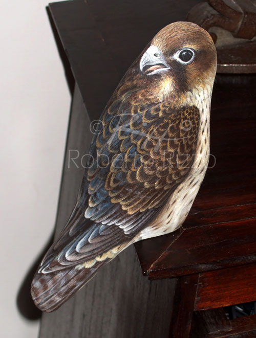 Sassi dipinti - falco pellegrino