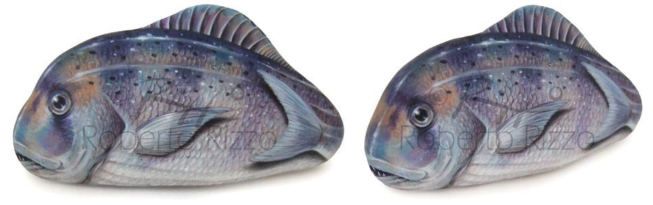 Sassi dipinti - dentice su pietra