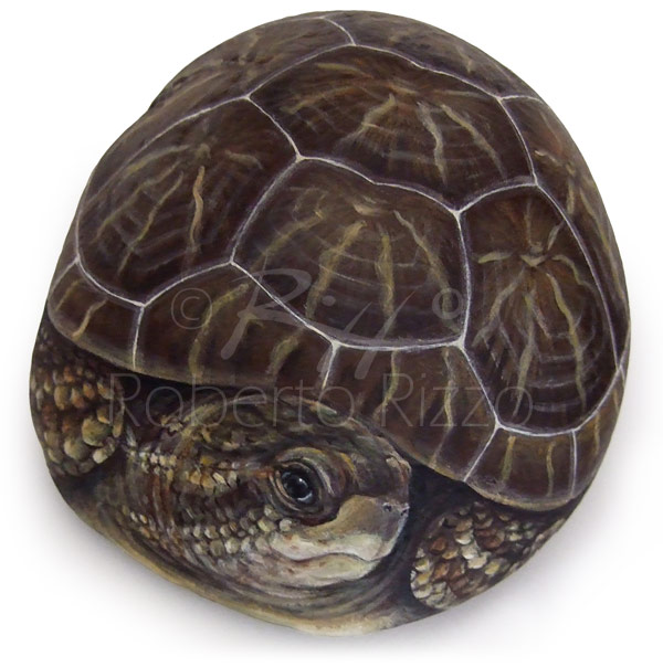 Sassi dipinti con tartarughe - testuggine terrestre