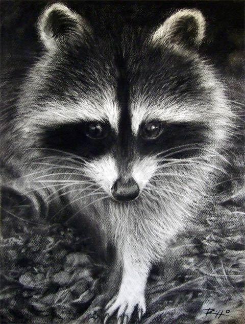 Ritratti di animali realizzati a carboncino