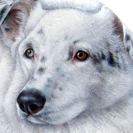 Ritratti di cani