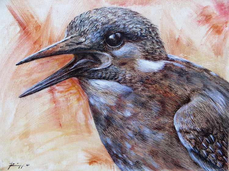 quadri uccelli