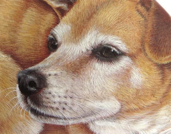 Cani dipinti sui sassi