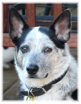 Cani dipinti su commissione - Dime