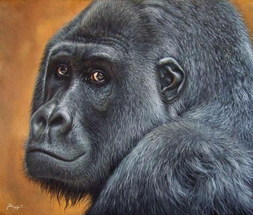 quadro-gorilla
