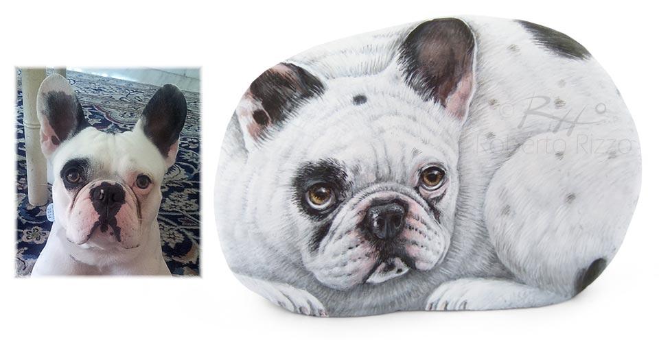 Ritratti di cani sui sassi - Rocky