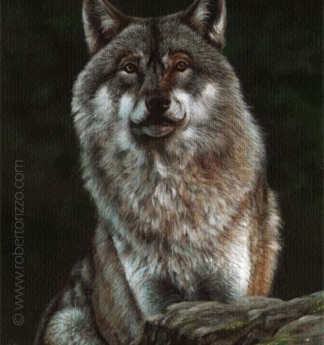 Wolf - Wildlife Art By Roberto Rizzo