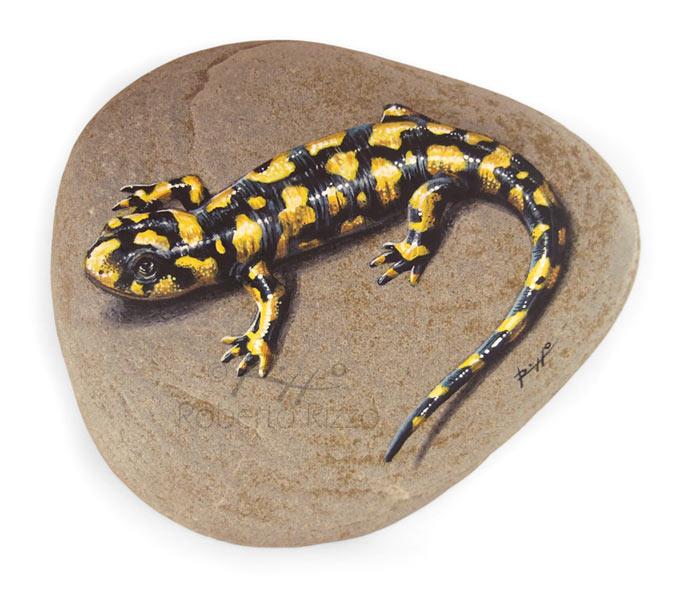 Salamandra macchiata dipinta a mano