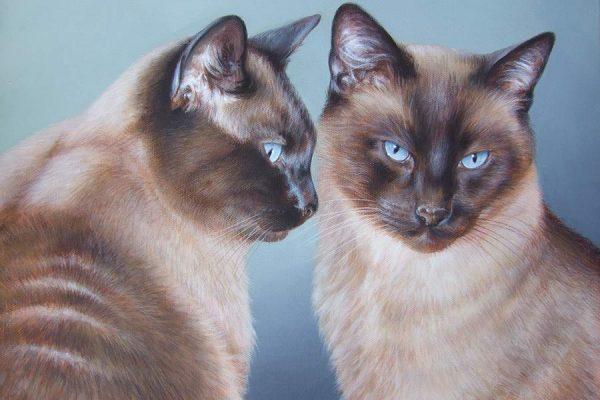 Quadro Con Gatti