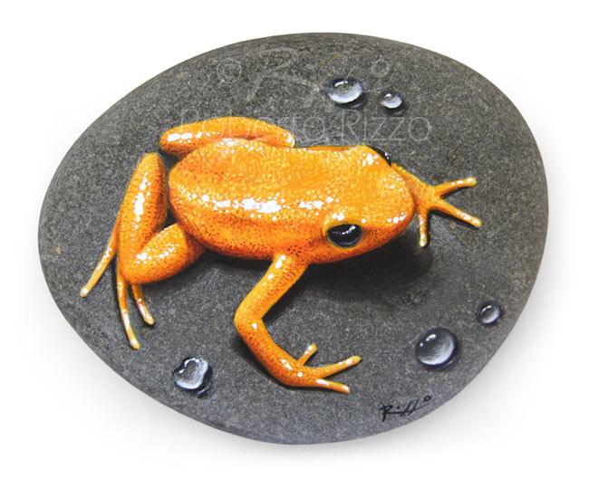 Rana dorata dipinta su sasso