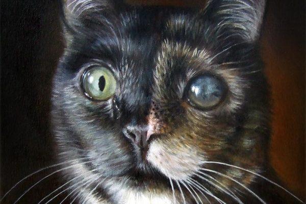 Ritratto Di Gatto Su Tela
